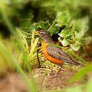 A Canadian Robin... by Larry Llewellyn