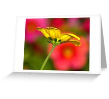 A Butter Cup.... Greeting Card