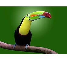 TOUCAN - HONDURAS Photographic Print