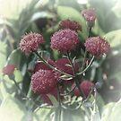 Dreamy Red Flowers by Lynn Bolt