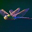 Another Dragonfly by Marvin Collins