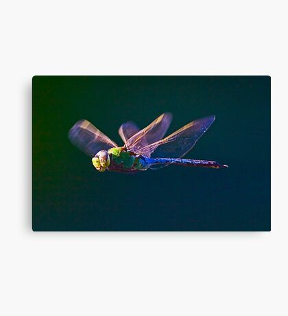 Another Dragonfly Canvas Print