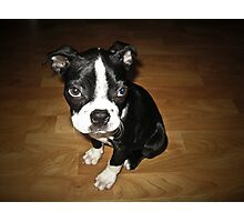 Blue-Eyed Louie Photographic Print