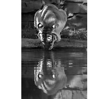 Taking a Drink Black & White Photographic Print