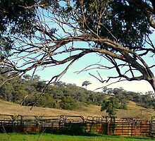 The Cattle Yards by Ragamuffin