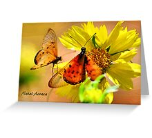 BUTTERFLY SERIES - Natal Acraea Greeting Card