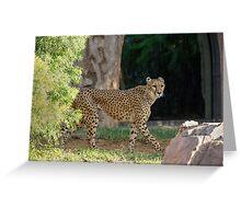 Cheetah Hunt Greeting Card