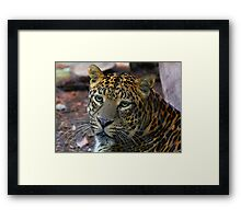 Leopard Painted Framed Print