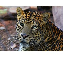 Leopard Painted Photographic Print