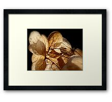Fairy Wings - JUSTART ©  Framed Print