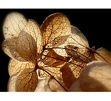 Fairy Wings - JUSTART ©  Photographic Print