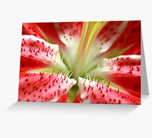 Star Gazer Oriental lilium Greeting Card