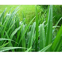 Everything's Greener After The Rain Photographic Print