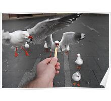 Determined Seagulls Poster