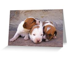 3puppies Greeting Card