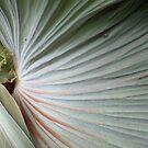 Huge Leaf by Chris Cohen