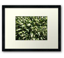 NC green garden Framed Print