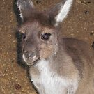 Young kangaroo by Susan Moss