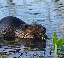 Lake Beaver by Molly  Kinsey