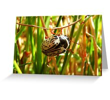 Macro shot of a beetle  Greeting Card