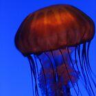 Jellyfish No.1, December 2006 by wonderfulworld