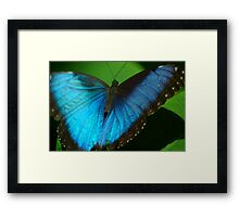 Butterfly No. 12, May 2008 Framed Print