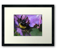 Sipping Nectar Through a Straw Framed Print
