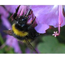 Sipping Nectar Through a Straw Photographic Print