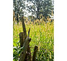 Glowing Grass Photographic Print