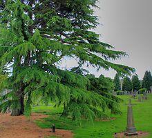 Abercorn Greenery by Tom Gomez