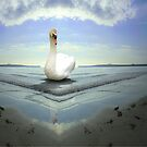 Swan Lake by Matthew Scotland