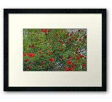 A Splash of Red Framed Print