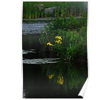yellow lillies by the ponds edge Poster