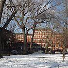 Snow View, Hamilton Park, Jersey City, New Jersey  by lenspiro