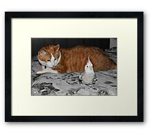 Good thing Arnie doesn't know I taste like chicken! :) Framed Print