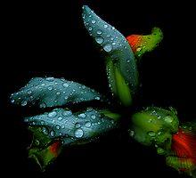 beauty in nature by alfarman