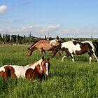 Urban Ponies by PrairieRose