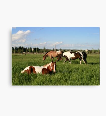 Urban Ponies Canvas Print