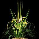Marsh Wren by Walter Colvin