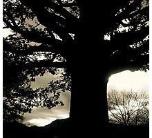 Strong As An Oak Photographic Print