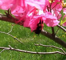 The Bee & The Blossom  by EliseMarie