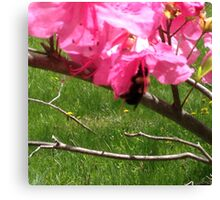 The Bee & The Blossom  Canvas Print
