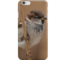 House sparrow (Passer domesticus) iPhone Case/Skin