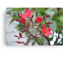 Simply Red; Blooming Tree in Wat Garden; La Mirada, CA USA Canvas Print