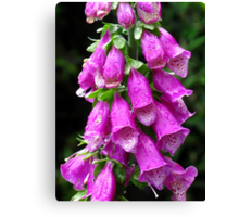 Purple Foxglove Canvas Print