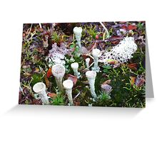 The Magic of the Forest Floor Greeting Card