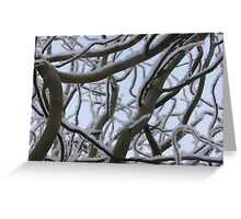 snow on willow Greeting Card