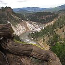 Grand Canyon of Yellowstone by Dawne Olson