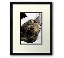 Pet Hamster Framed Print