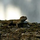 Gila Lizard by NIC1D